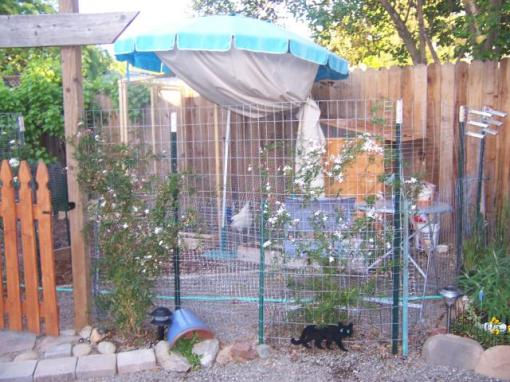A backyard chicken run for six laying hens